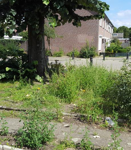 Openbaar groen slecht onderhouden in de regio: 'Ze kunnen hier bijna de stoep maaien'