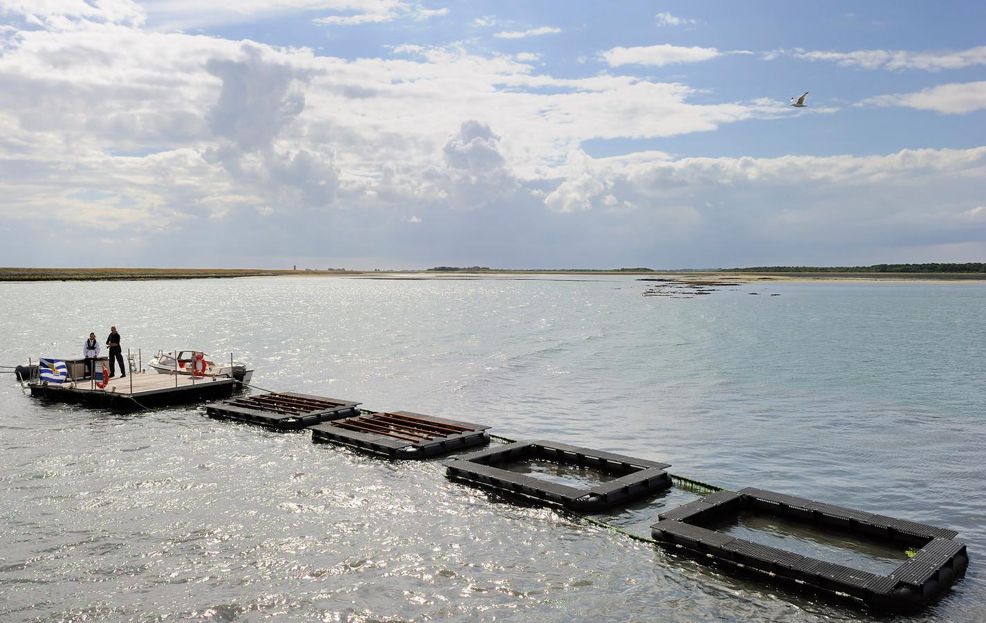 Zeewier kan niet alleen worden gebruikt voor de productie van biobrandstoffen.