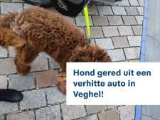 Hond al uur in te warme auto in Veghel, politie slaat raam in