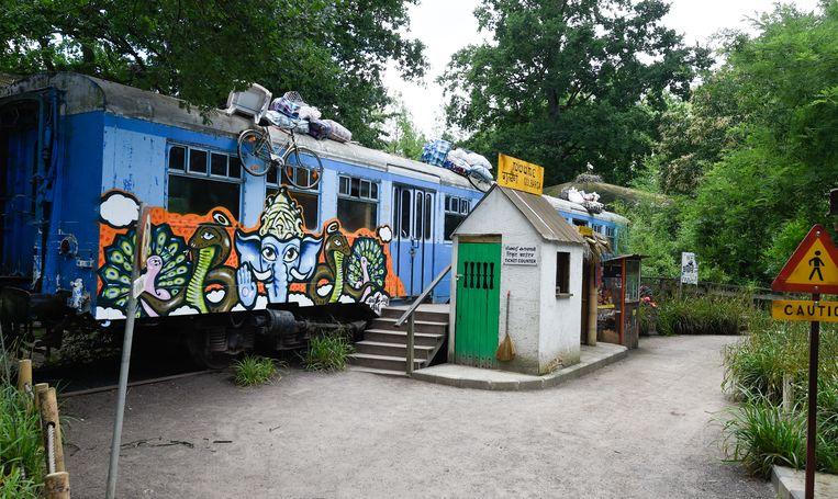 Een viertal bezoekers verschuilden zich in een oude treinwagon, die echter niet volledig afgesloten kon worden. Toen de leeuw tot op tien meter van de wagon naderde, werd beslist het dier neer te schieten.