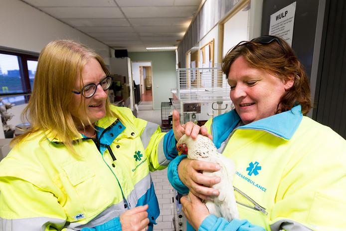 Vrijwilligers van de dierenambulance.