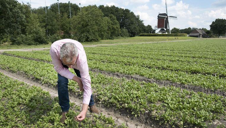 Groenteteler Adrie van de Einden uit Lierop inventariseert de schade die het noodweer op zijn land heeft veroorzaakt. Beeld Foto Merlin Daleman