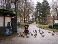 Expert: Nijmegen te laks met bestrijden van ratten