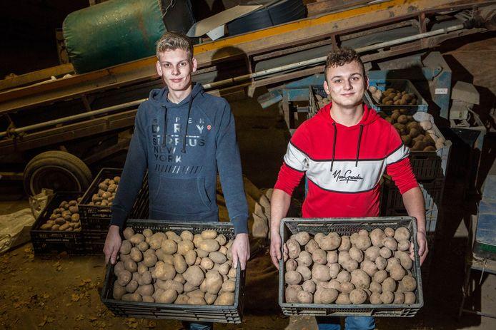 De 19-jarige aardappelboeren Mels Kooij en Bas Peeters uit Maasdam verkopen hun piepers via het internet.