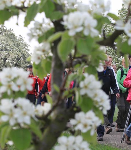 Al 21.000 wandelaars schrijven zich in voor de 26ste Bloesemtocht
