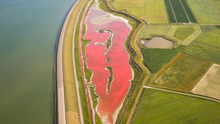 Het water van natuurgebied Wagejot, aan de oostkant van Texel, is sinds enkele dagen felroze gekleurd. Beeld anp