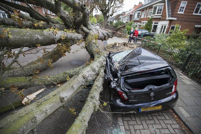 Omgewaaide boom verwoest geparkeerde auto in Bloemendaal.
