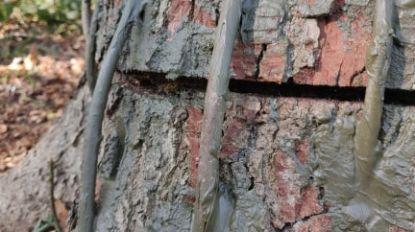 Gevandaliseerde bomen in Waerdebroecken lijken gered