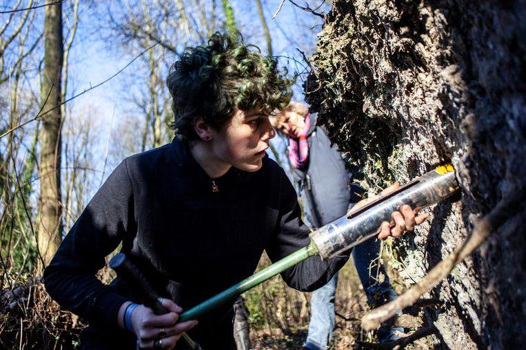In het Vliegenbos en Noorderpark in Noord. In omgevallen bomen, kunstmatig aangelegde of afgestoken wandjes maken vrijwilligers gaten voor holletjes. Beeld Lin Woldendorp