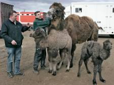 Kamervragen over plan Appelterns dierenpark