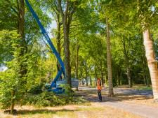 Noodkap 'gevaarlijke' bomen Koelaan Zeist van start