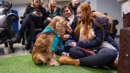 Beestig initiatief van Karel De Grote Hogeschool: knuffelhonden helpen studenten ontstressen