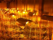 Honderden wietplanten gevonden in verborgen ruimte van café in Steenbergen, drie aanhoudingen