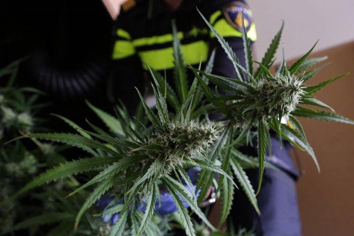 Politie ontdekt bij toeval hennepkwekerij in Roosendaalse woning als twee mannen proberen in te breken.