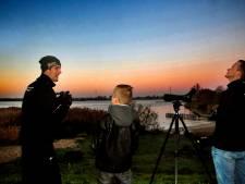 Zo'n 27.000 ganzen geteld in de Biesbosch: 'Dit blijf ik doen tot ik een oude opa ben'