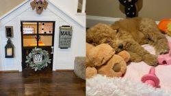 Baasje tovert bezemkast om tot hondenparadijs