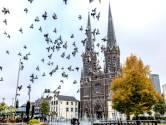PvdA: Tilburgse duiven aan de pil