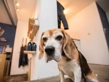 Hartverwarmende actie hielp huishond Joey van tumor af