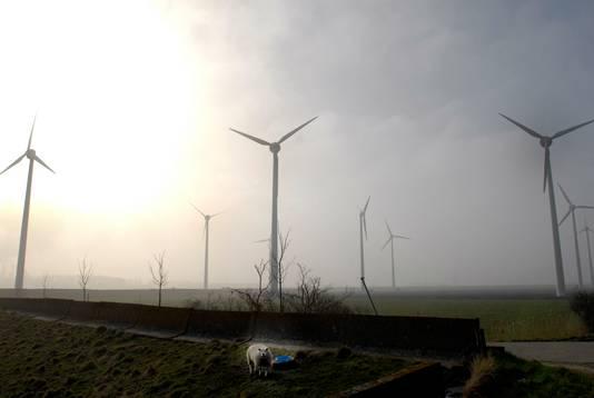 De windmolens van energiebedrijf Delta die al in de Anna Mariapolder tussen Ossendrecht en Rilland staan.