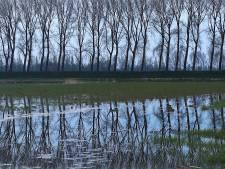 Populierenbos Noord Aa krijgt een make-over: gevaarlijke bomen gekapt
