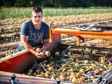 Boeren maken zich zorgen: 'hitte kan de nekslag zijn voor gewassen'