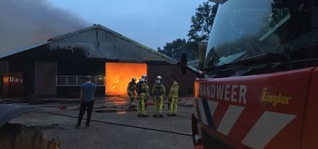 Brand verwoest Hardenbergse melkveestal, 50 koeien ongedeerd