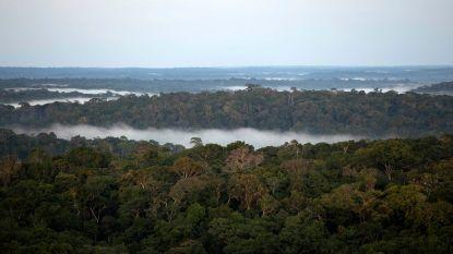 """Expert waarschuwt: """"Volgende pandemie zou wel eens uit Amazonewoud kunnen komen"""""""