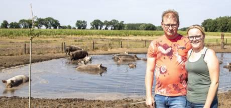 Is deze modderpoel in Hancate de mooiste van Nederland?  'De varkens vinden het geweldig'