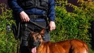 Mechelse herder Duts is nieuwe kracht bij politie