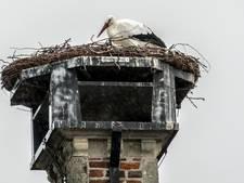 Bijna winter? Ooievaar op nest in Gennep