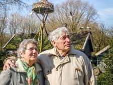 Frits (80) telt dit weekend weer ooievaars: De hobby is wat uit de hand gelopen
