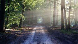 Exhibitionist slaat meermaals toe in bos tussen Brugge en Damme