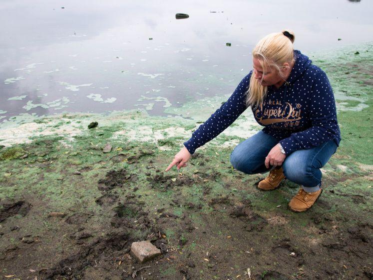 Het Schone Oosten: hoe vervuild zijn de uiterwaarden?