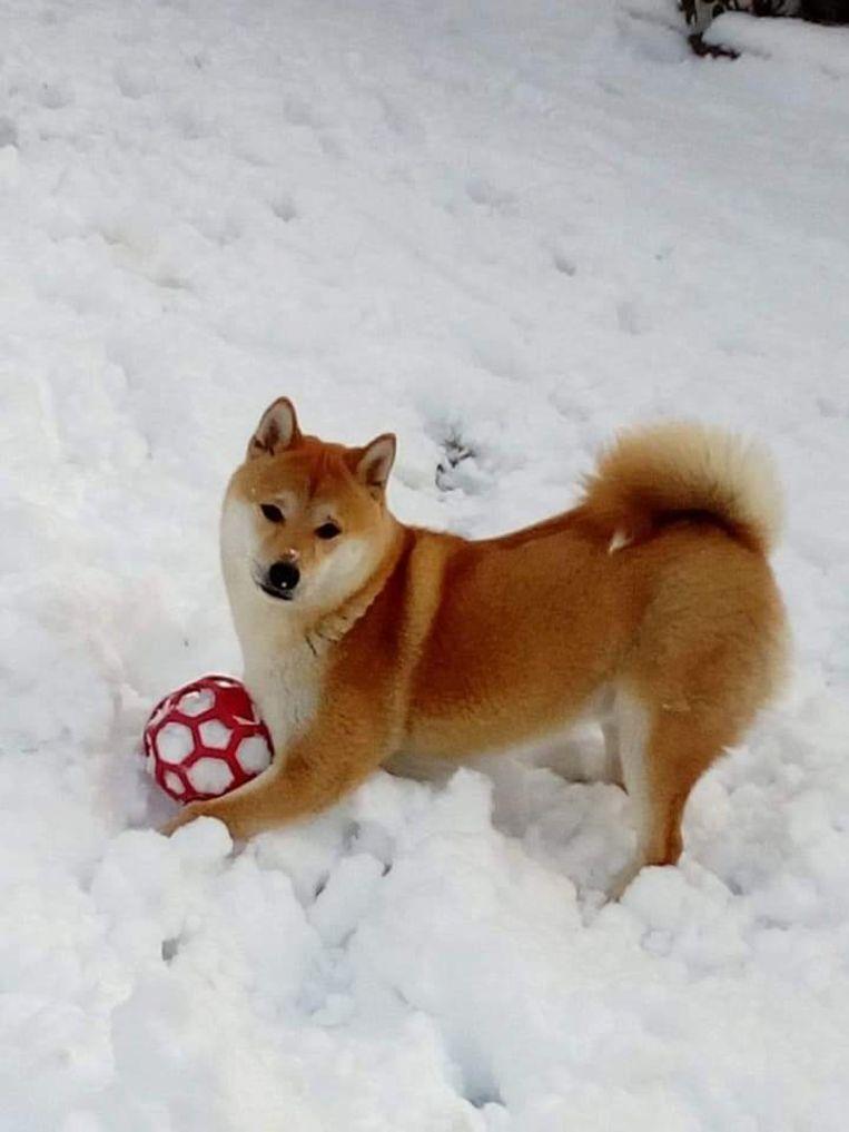 Gelukkig is deze bal rood!