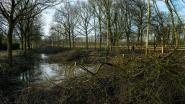 Eén groot natuurpark dat Groot Schietveld, Klein Schietveld en Kalmthoutse Heide verbindt, dat is de droom van GroenRand
