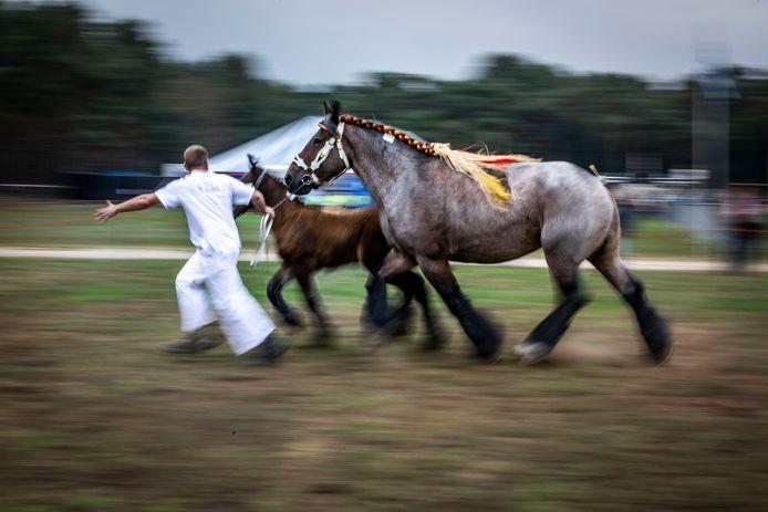 De traditionele fokpaardendag op kermismaandag in Lierop.