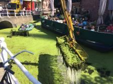 Delfland maakt werk van weghalen kroos uit grachten