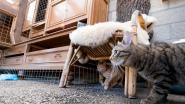 Katten in het nieuw bij Dierenbescherming