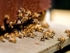 Zestig soorten bijen aan de dijk, te zien op expositie in Beuningen