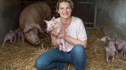 Worst van varkens uit warm nest