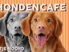 Honden zoeken baasjes bij eerste Hondencafé in Rotterdam-Noord