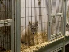 Tips over illegale dierenhandel voortaan ook anoniem door te geven