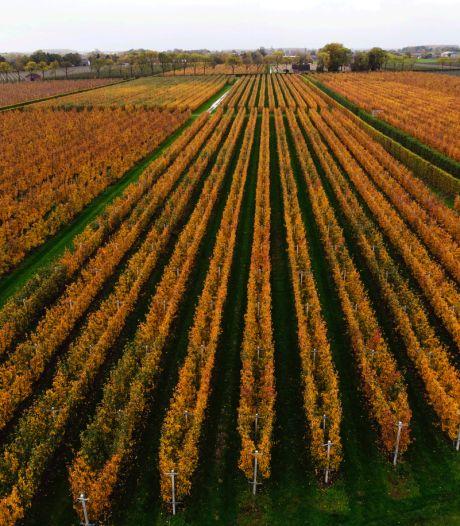 Van perengroen en kersenrood naar een herfstbladerenbruine Betuwe