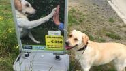 Stoepborden tegen hondenpoep