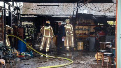 Tientallen siervogels ontsnappen aan de vlammen bij brand in paardenstal