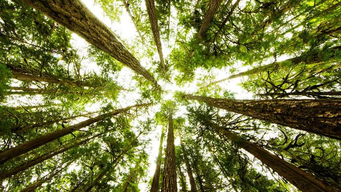 L'arbre serait-il intelligent ? L'épineuse question interroge la communauté scientifique.