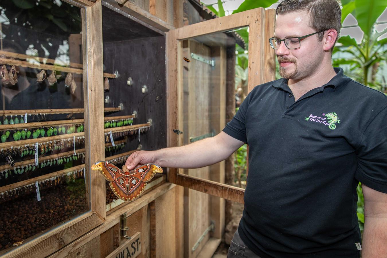 Sander de Klerk laat de reuzenvlinder zien.