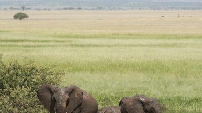 Britse soldaat gedood door olifant tijdens missie tegen stropers in Malawi