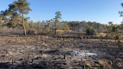 """Natuurbrand in De Liereman: """"Minder schade dan gedacht, maar wel uitgerekend in meest waardevolle gebied"""""""