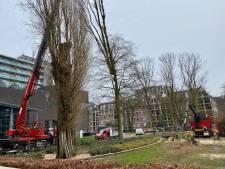 De zaag ging aan het werk, maar van de populieren bij Factorium in Tilburg blijft toch nog één stam staan